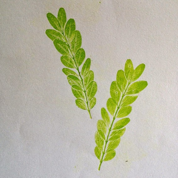 Impressions végétales